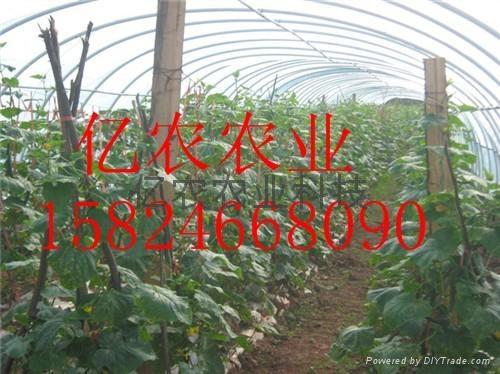 出售蔬菜大棚骨架安陽億農 1