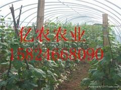 出售蔬菜大棚骨架安陽億農
