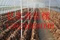 出售蘑菇溫室大棚骨架億農