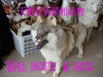 动物狼头饰图片