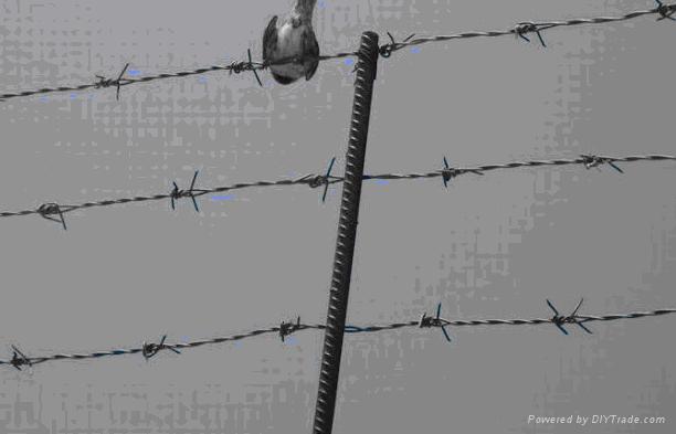 安平厂家供应交通隔离护栏网 1