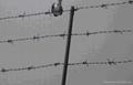 安平厂家供应交通隔离护栏网