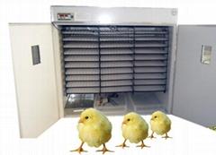 Advance incubator for chicken