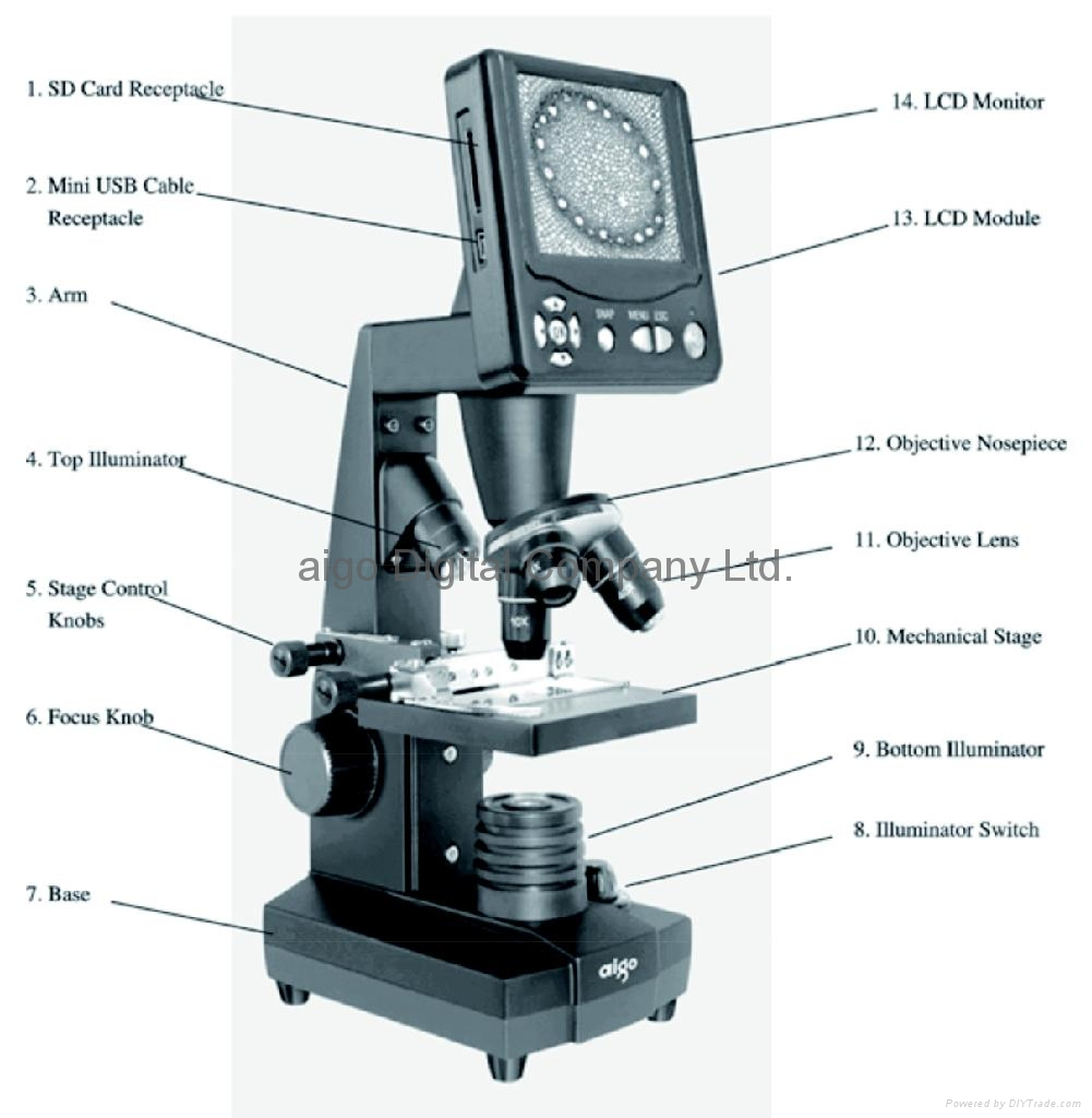 microscope use worksheet