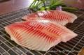 shallow skinned tilapia fillets 2