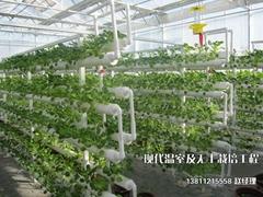 管式無土栽培設施