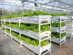 多層水培槽式栽培設施