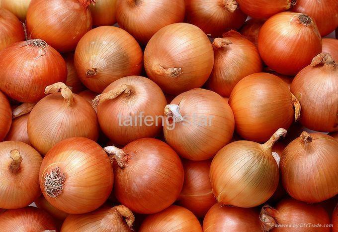 2012 onion  1