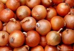 2012 onion