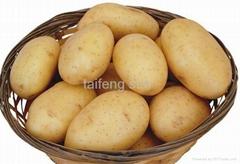 2012 potato
