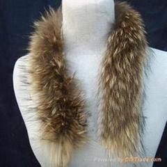 貉子(浣熊)毛领帽条