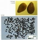 black sesame seed color