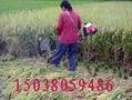 富民水稻收割機