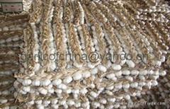 2012 Fresh Garlic
