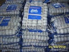 Garlic Of China