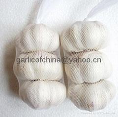 white garlic 2011