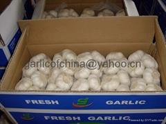 Super white garlic