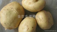 早熟脫毒土豆種子早大白