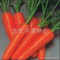 日本进口胡萝卜种子