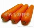 日本进口胡萝卜种子 3