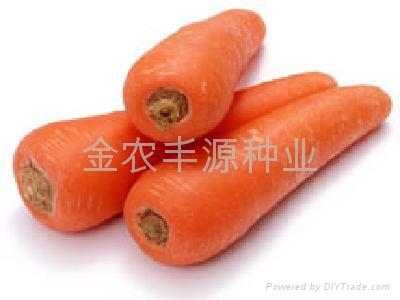 日本进口胡萝卜种子 4