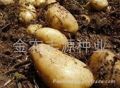 農作物種子