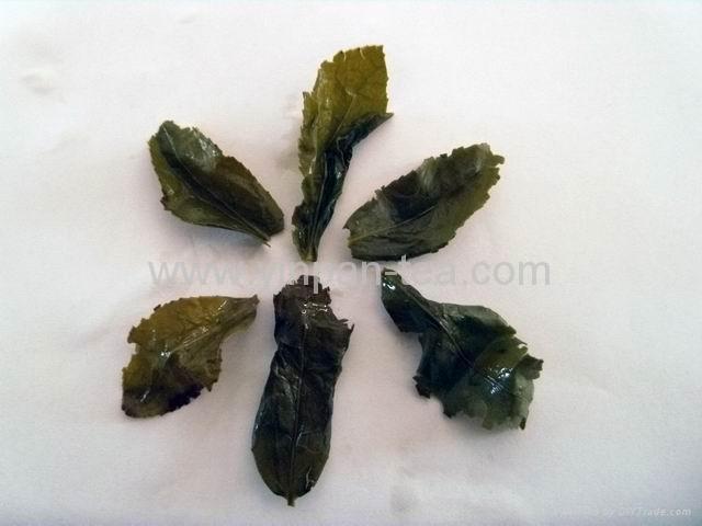 Traditional Aroma Ti Kuan Yin 4
