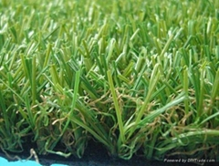 Landscaping turf grass