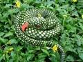 盤蛇抱枕動物毛絨玩具