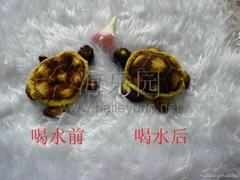 海龟水宝宝儿童玩具