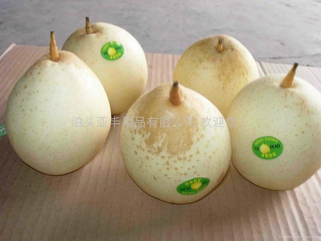 Fresh Ya pear 3