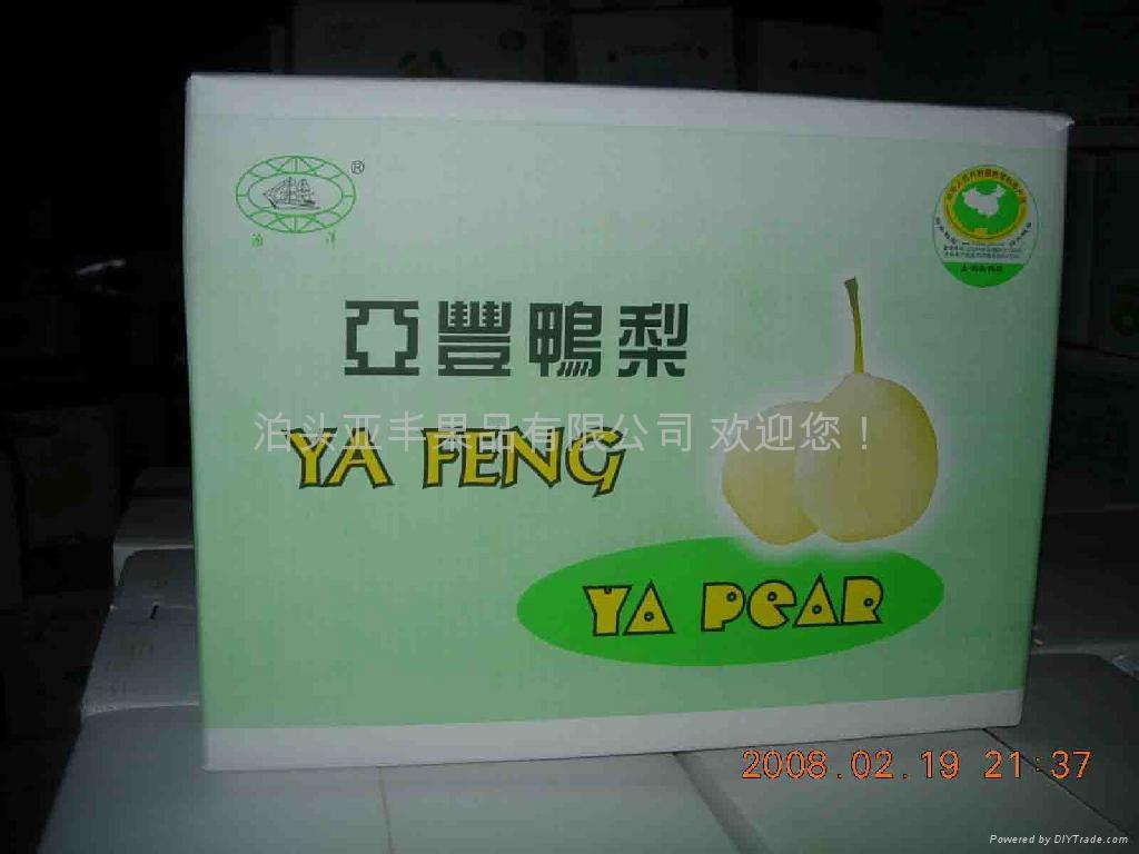Fresh Ya pear 4