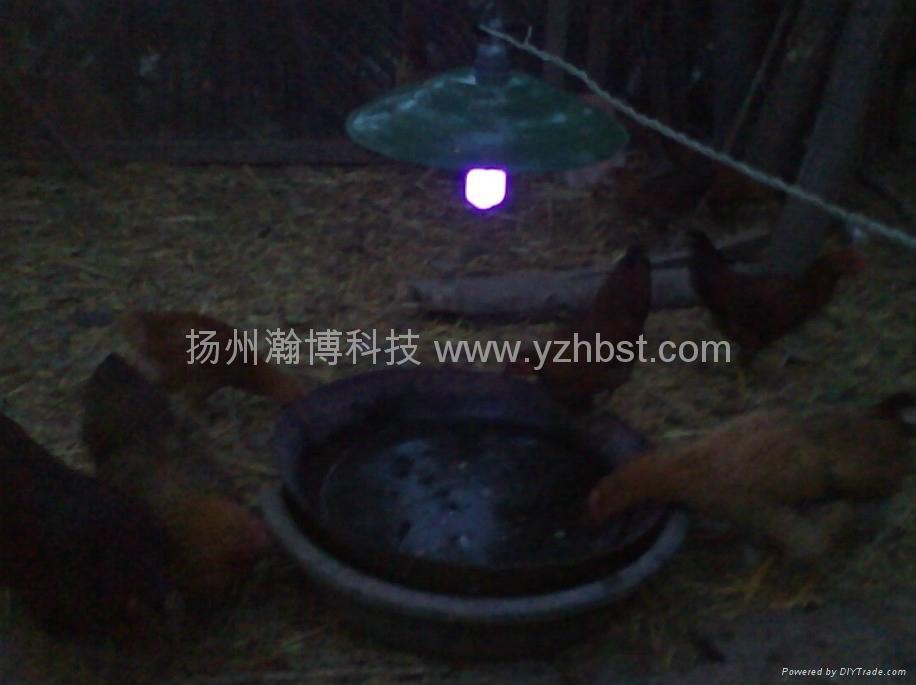 養雞燈 2
