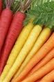 胡萝卜切丁切条机 1