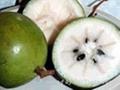 star apple or milk fruit