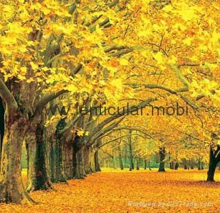 壁纸 风景 森林 桌面 320