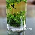新桑葉茶批發 1