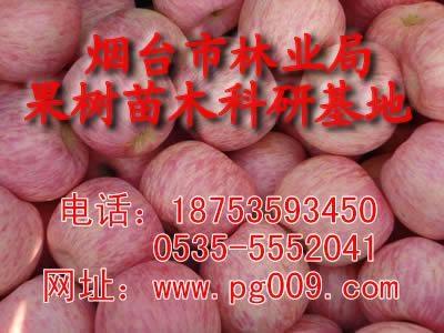 煙台蘋果苗 1
