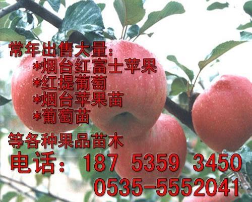 紅富士蘋果苗 1