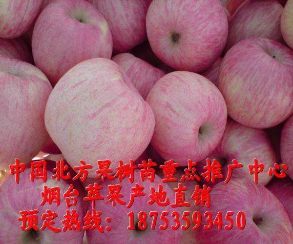 煙台紅富士蘋果 1