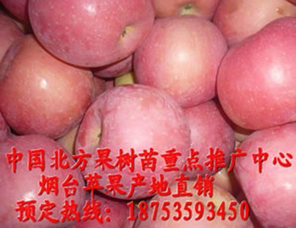 無病毒蘋果苗 1