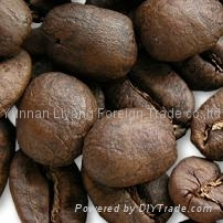 yunnan china manufacturer supply of best coffee beans