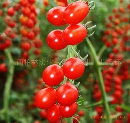 tomato paste 2