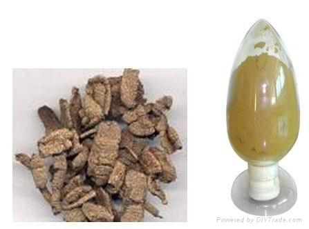 morinda officinalis polysaccharides 1
