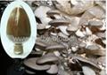 pleurotus ostreatus polysaccharides