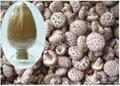 lentinus edodes (shiitake mushroom)