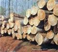 Thai Teak Wood 1