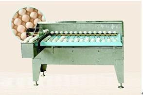 Egg grading machine MT-108 1