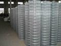 供应不锈钢电焊网  2