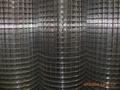 供应不锈钢电焊网  4